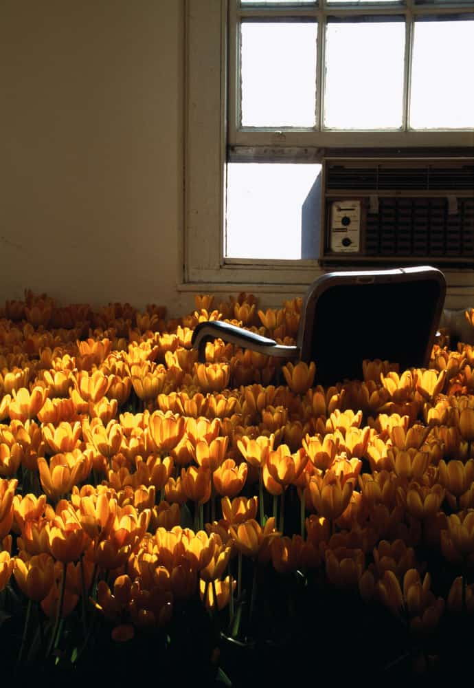 Orange Tulips, 3rd floor. Installation, titled Bloom, of 28,000 flowers in bloom and 5,600 square feet of live sod. Massachusetts Mental Health Center, Boston, 2003. Commissioned by Harvard Medical School and the Department of Mental Health of Massachusetts.