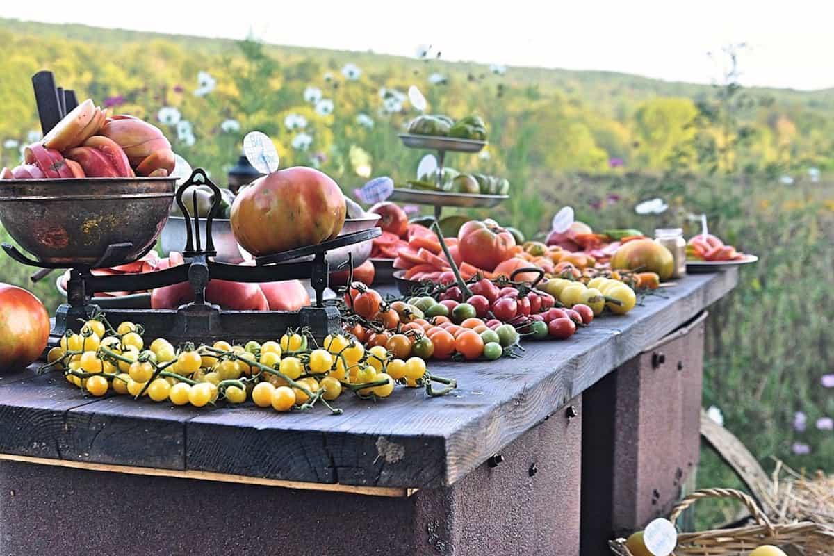 Top photo of Tomato Table courtesyMagdalena Mieczkowska