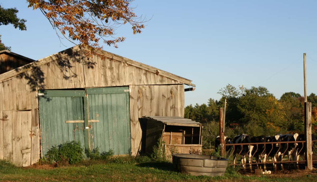 Benson Family Farm, 2016