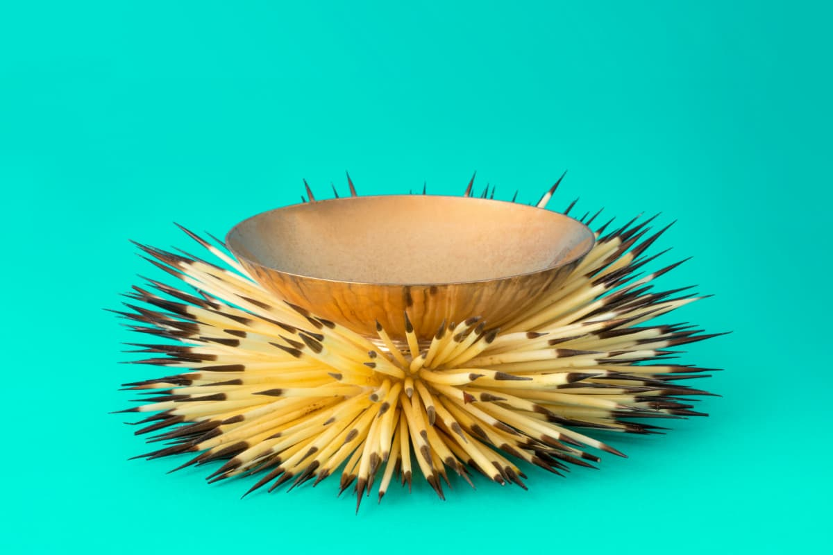 Take It Home: Sleek, Spiny, Shiny